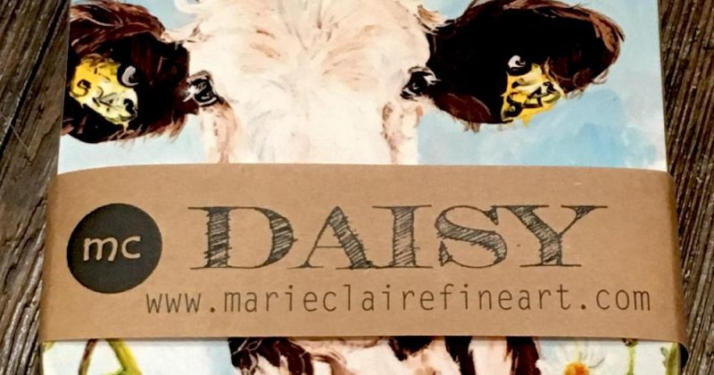 Packaged set of 4 Daisy Coasters